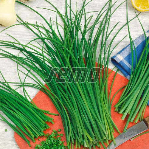 PROFI, Zelenina SEMO - Pažitka pravá Jemná, p2801 (Allium schoenoprasum L.)