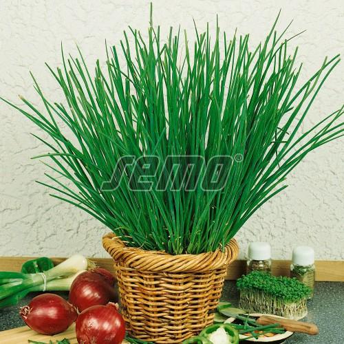 PROFI, Zelenina SEMO - Pažitka pravá Erecta, p2805 (Allium schoenoprasum L.)