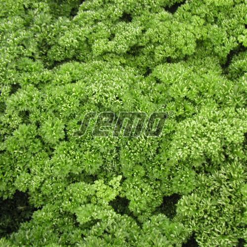 PROFI, Zelenina SEMO - Petržel zahradní naťová Kadeřavá, p3052 (Petroselinum crispum (Mill.) Nym.ex A.W.Hill convar.vulgare (Nois) Danert)