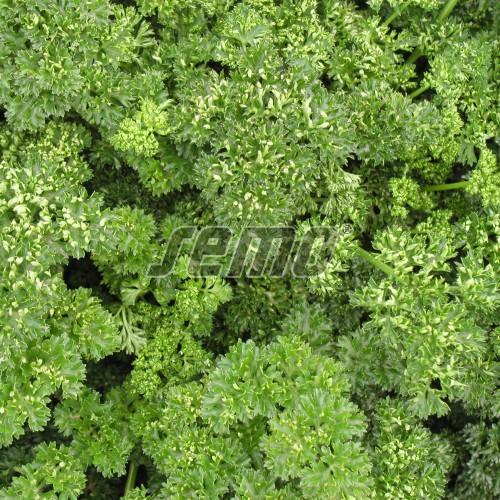 PROFI, Zelenina SEMO - Petržel zahradní naťová Kudrnka, p3053 (Petroselinum crispum (Mill.) Nym.ex A.W.Hill convar.vulgare (Nois) Danert)