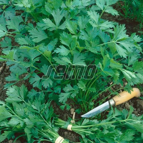 PROFI, Zelenina SEMO - Petržel zahradní naťová Gigante D´Italia, p3060 (Petroselinum crispum (Mill.) Nym.ex A.W.Hill convar.vulgare (Nois) Danert)