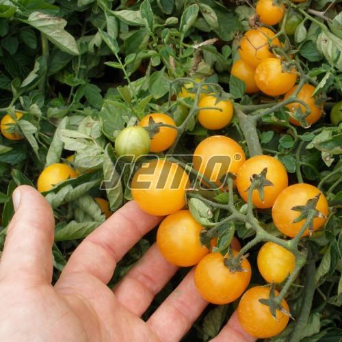 PROFI, Zelenina SEMO - Rajče keříčkové Minigold, p3119 (Lycopersicon esculentum Mill.)
