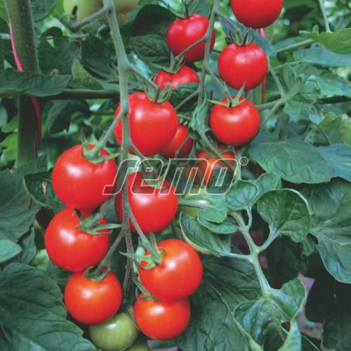 PROFI, Zelenina SEMO - Rajče tyčkové Bejbino F1, p3221 (Lycopersicon esculentum Mill.)