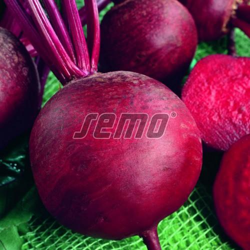 PROFI, Zelenina SEMO - Řepa salátová Červená kulatá, p3502 (Beta vulgaris L.var.conditiva Alef.)