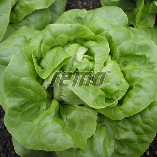 PROFI, Zelenina SEMO - Salát hlávkový Brilant, p3762 (Lactuca sativa L. var.capitata L.)