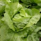 PROFI, Zelenina SEMO – Salát hlávkový Maršálus, p3828
