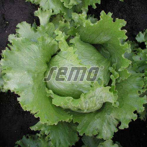 PROFI, Zelenina SEMO - Salát hlávkový Medimo, p3858 (Lactuca sativa L. var.capitata L.)