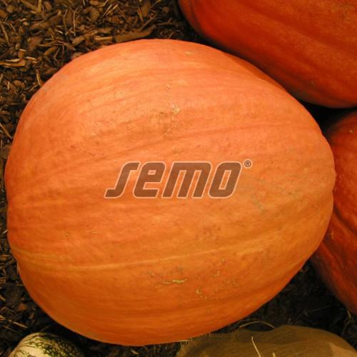 PROFI, Zelenina SEMO - Tykev velkoplodá Gran Gigante, p4071 (Cucurbita maxima Duchesne)