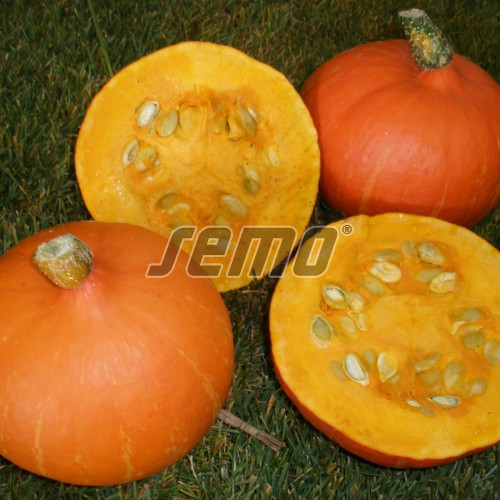 PROFI, Zelenina SEMO - Tykev velkoplodá Delician F1, p4077 (Cucurbita maxima Duchesne)