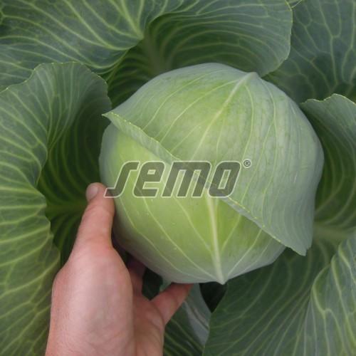 PROFI, Zelenina SEMO - Zelí hlávkové Unikát F1, p4206 (Brassica oleracea L. convar.capitata (L.) Alef. var. alba DC.)