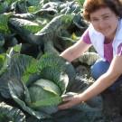 PROFI, Zelenina SEMO – Zelí hlávkové Ritmo F1, p4243