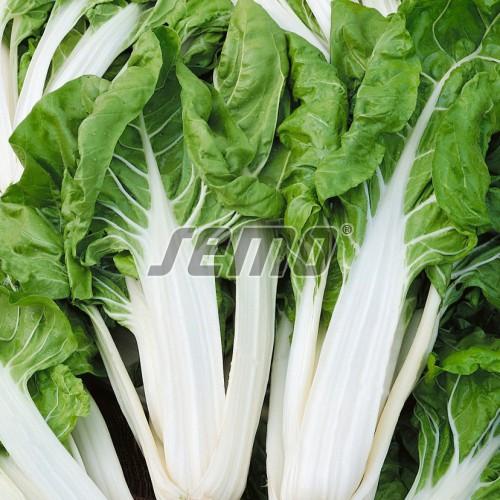 PROFI, Zelenina SEMO - Mangold Lucullus, p4901 (Beta vulgaris L. var. Vulgaris)