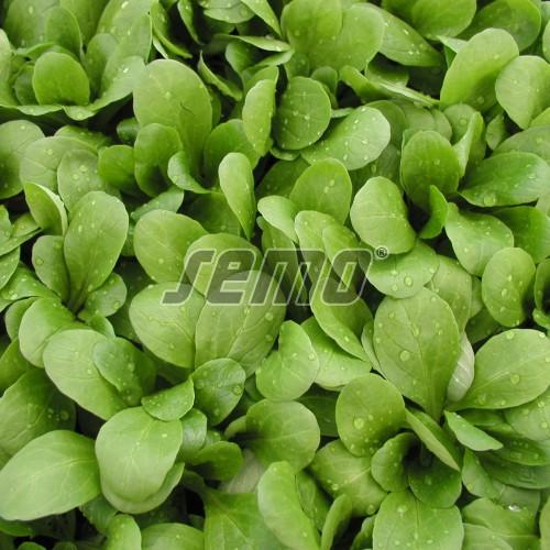 PROFI, Zelenina SEMO - Kozlíček polníček Larged leaved, p5001 (Valerianella locusta (L.) Laterr.)