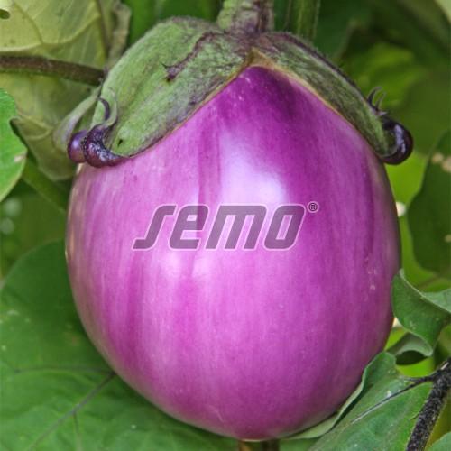 PROFI, Zelenina SEMO - Lilek vejcoplodý Beatrice F1, p1915 (Solanum melongena L.)