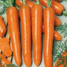 PROFI, Zelenina SEMO - Mrkev obecná Marquette, p2224 (Daucus carota L.)
