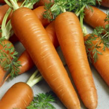 PROFI, Zelenina SEMO - Mrkev obecná Rubína, p2242 (Daucus carota L.)
