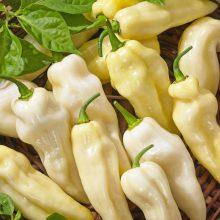 PROFI, Zelenina SEMO - Paprika roční pálivá Habanero White, p2550 (Capsicum annuum L. (partim))