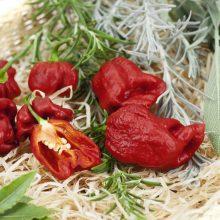 PROFI, Zelenina SEMO - Paprika roční Carolina Reaper, p2570 (Capsicum chinense)
