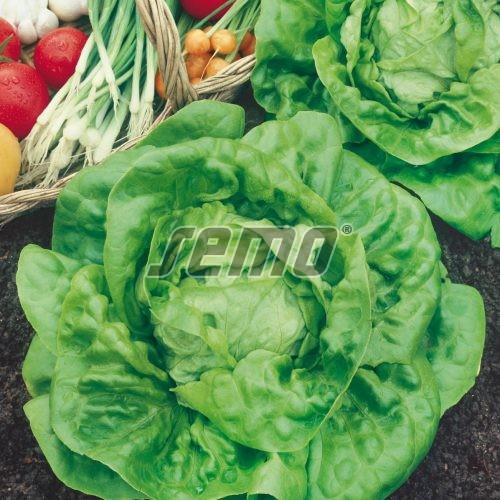PROFI, Zelenina SEMO - Salát hlávkový Major, p3801 (Lactuca sativa L. var.capitata L.)
