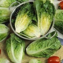 PROFI, Zelenina SEMO - Salát římský Little Gem, p3894 (Lactuca sativa L. var.capitata L.)