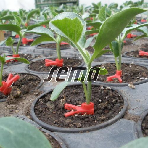 PROFI, Zelenina SEMO - Podnože na roubování okurek i melounů Sprinter F1, p4034 (Cucurbita maxima x cucurbita moschata)