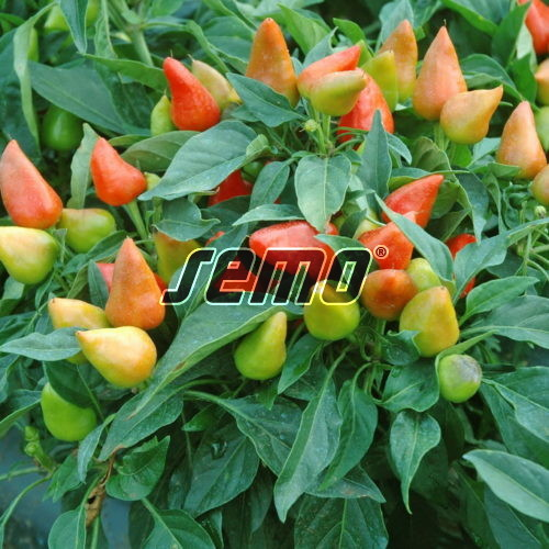 PROFI, Zelenina SEMO - Papričky okrasné Plamínek červený, p9139 ()