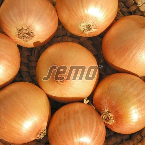 PROFI, Zelenina SEMO - Cibule Alice, p0521 (Allium cepa L.)