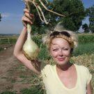 PROFI, Zelenina SEMO – Cibule kuchyňská Globo, p0535