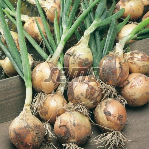 PROFI, Zelenina SEMO - Cibule Winteria, p0572 (Allium cepa L.)