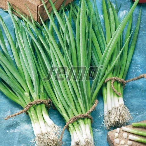 PROFI, Zelenina SEMO - Cibule zimní Snow Queen F1, p0588 (Allium fistulosum L.)