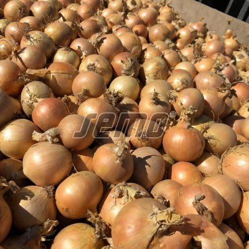 PROFI, Zelenina SEMO - Cibule Hazera 2 F1, p0860 (Allium cepa L.)