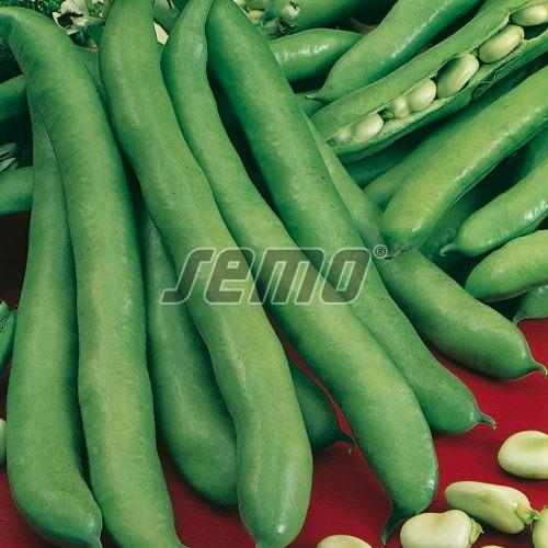 PROFI, Zelenina SEMO - Bob zahradní Saturn, p0972 (Faba vulgaris major)