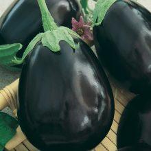 PROFI, Zelenina SEMO - Lilek Krasan, p1903 (Solanum melongena L.)