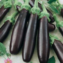 PROFI, Zelenina SEMO - Lilek Klasik, p1906 (Solanum melongena L.)