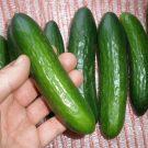 PROFI, Zelenina SEMO – Okurka setá salátová hadovka Baby F1, p2419