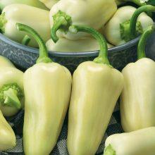 PROFI, Zelenina SEMO - Paprika roční Amykus F1, p2593 (Capsicum annuum L.)
