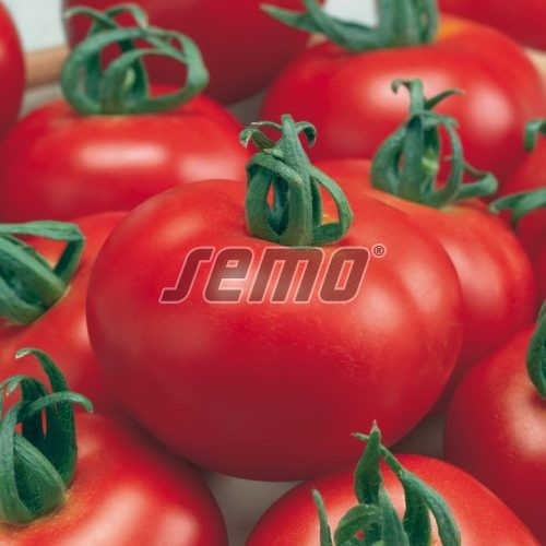 PROFI, Zelenina SEMO - Rajče tyčkové Žofka F1, p3214 (Solanum lycopersicum L.)