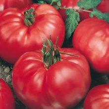 PROFI, Zelenina SEMO - Rajče tyčkové Jergus F1, p3225 (Solanum lycopersicum L.)