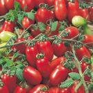 PROFI, Zelenina SEMO – Rajče tyčkové Valdo, p3272