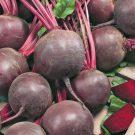 PROFI, Zelenina SEMO – Řepa salátová Red Shine, p3512