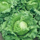 PROFI, Zelenina SEMO – Salát ledový Maximo, p3855