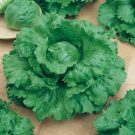 PROFI, Zelenina SEMO – Salát ledový Medimo, p3858