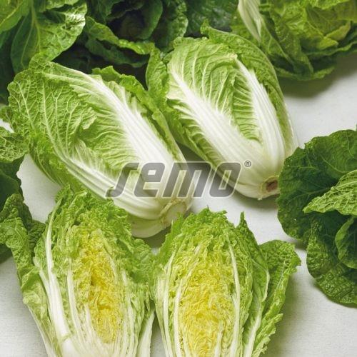 PROFI, Zelenina SEMO - Zelí pekingské Merkur F1, p4408 (Brassica rapa L.)