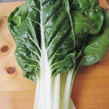 PROFI, Zelenina SEMO - Mangold Lusiana, p4902 (Beta vulgaris L. var. vulgaris)