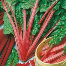 PROFI, Zelenina SEMO - Mangold Rhubarb Chard, p4907 (Beta vulgaris L. var. vulgaris)