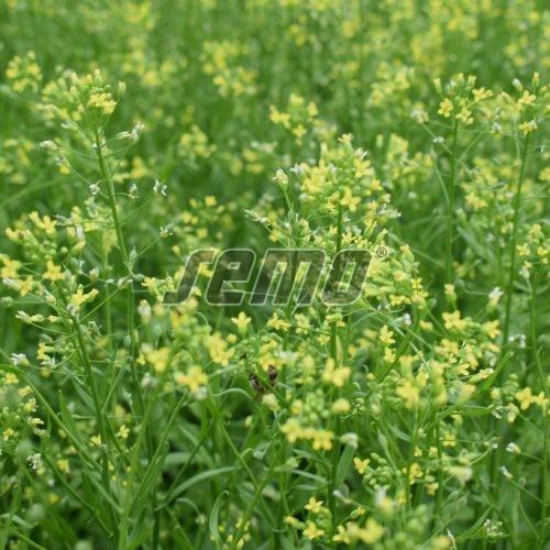 PROFI, Polní plodiny a ostatní - Lnička setá Zuzana, p8725 (Phacelia tanacetifolia)