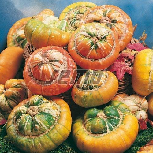 PROFI, Zelenina SEMO - Tykev okrasná Mini Turban, p9211 (Cucurbita pepo)