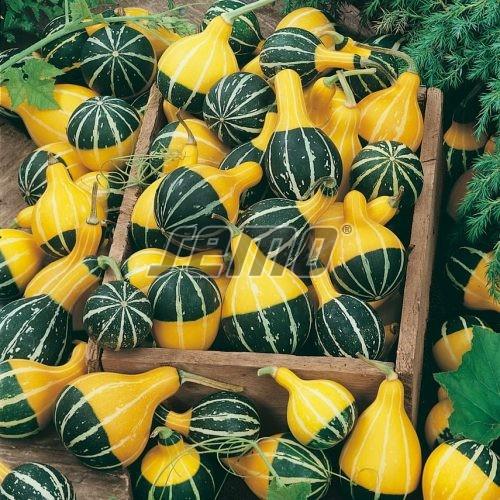 PROFI, Zelenina SEMO - Tykev okrasná Pear Bicolor, p9212 (Cucurbita pepo)