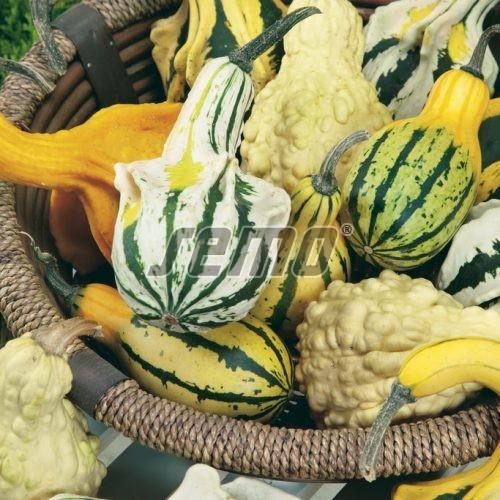 PROFI, Zelenina SEMO - Tykev okrasná Andělská křídla, p9214 (Cucurbita pepo)
