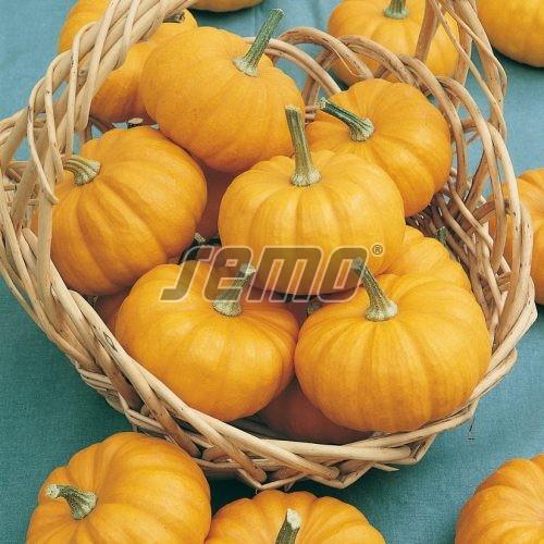 PROFI, Zelenina SEMO - Tykev okrasná Jack Be Little, p9217 (Cucurbita pepo)